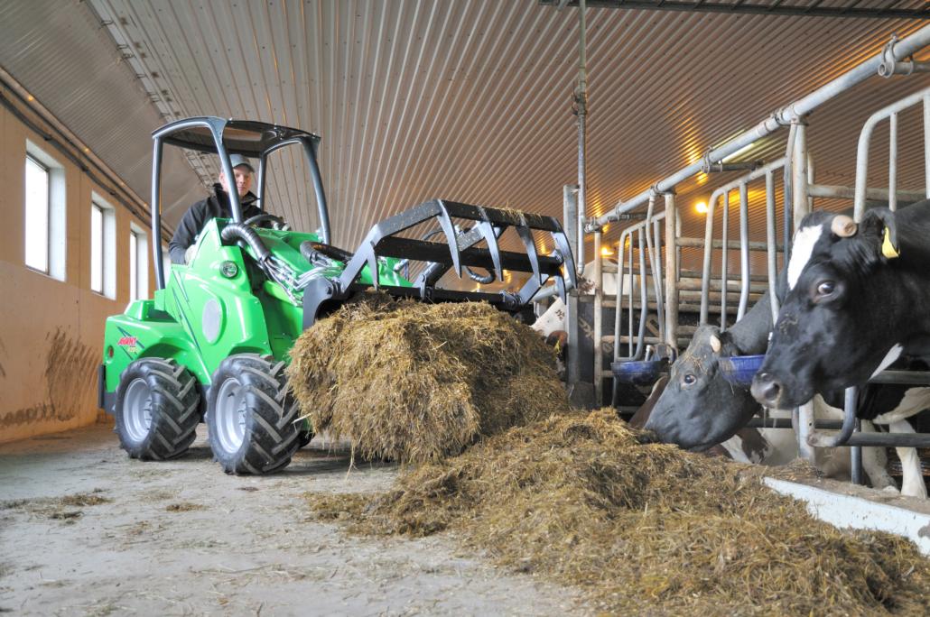avant-füttern-kühe-stall