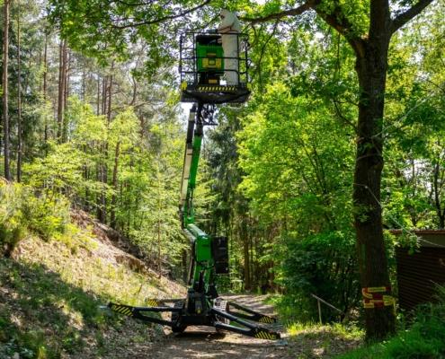 Steiger Baumabtragung